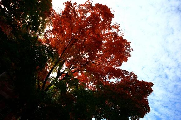 foglierosseblue